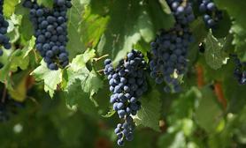 Parras de la Fuente Feria de la Uva y el Vino